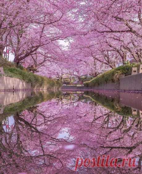 Япония..