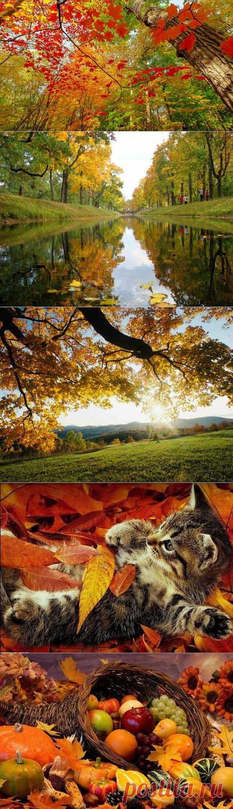 Как красиво запечатлеть Осень?.