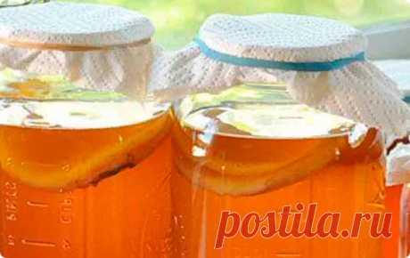 Чайный гриб: полезные свойства, противопоказания, выращивание