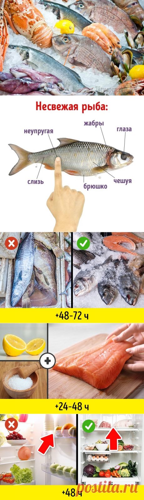 10 маленьких хитростей, как идеально сохранить свежую рыбу