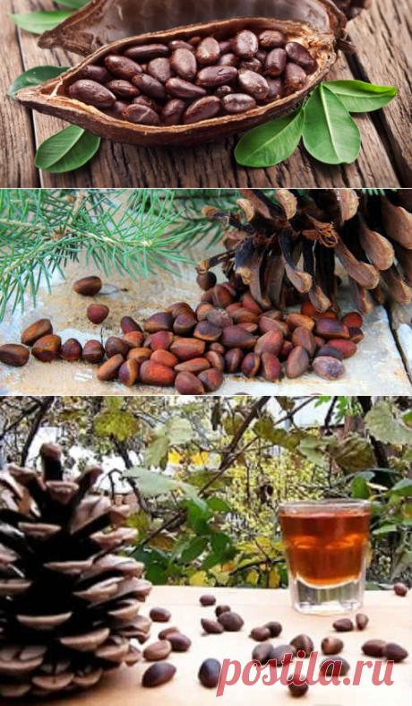 Настойка из кедровых орехов на водке - применение и рецепт