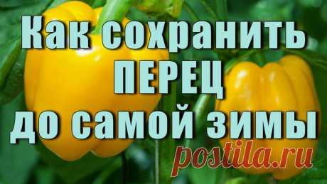 Сладкий и горький перец — желанные овощи на нашем столе. Они не только вкусны, но и содержат множество полезных витаминов.
