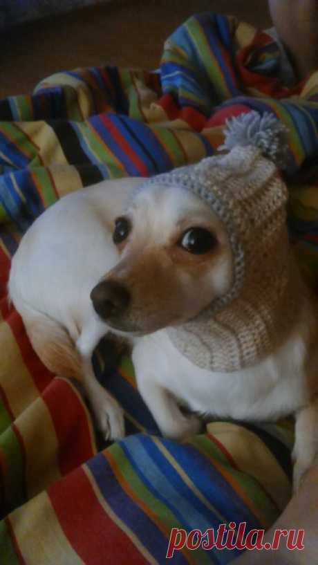 Выкройки одежды для собак, шьём сами | ВКонтакте