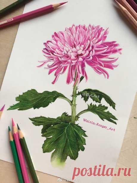Рисуем акварелью хризантему — Сделай сам, идеи для творчества - DIY Ideas