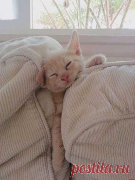 17 сладк спящих котиков. Им можно позавидовать