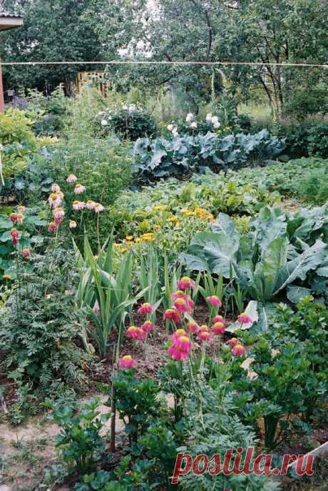 """Заговоры для сада и огорода, чтобы урожай хороший был и вредители не губили растения.   Познавательный сайт ,,1000 мелочей"""""""