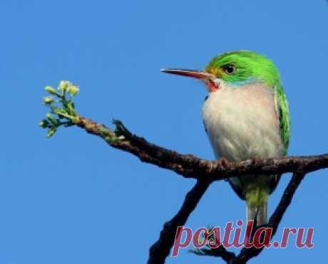 Кубинский тоди | Zooclub сайт о животных и растениях