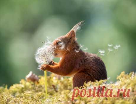 Comedy Wildlife Photo Awards 2019: животные, которые станут мемами — Российское фото