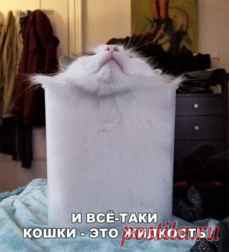 Пятничные котики в конце самоизоляции - Ушки-хвостики - медиаплатформа МирТесен