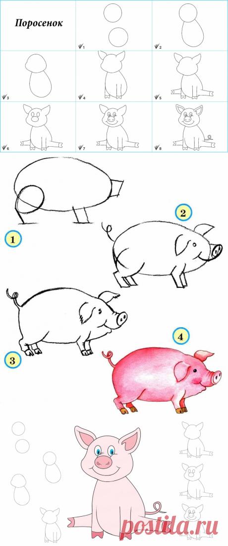 Как нарисовать свинью: много вариантов — Сделай сам, идеи для творчества - DIY Ideas