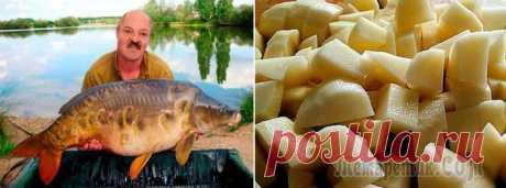 Ловля карпа на картошку Самый простой и экономичный способ ловли карпа – это применение обычного картофеля в качестве наживки. Несмотря на свою доступность, этот метод требует серьезных подготовительных процессов, чтобы рыба...