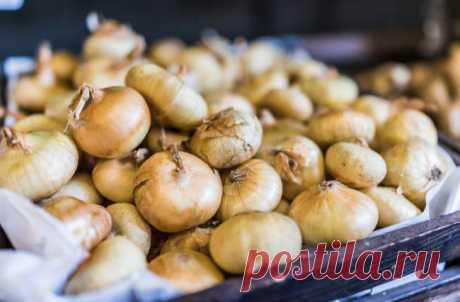 Приправа из лука в духовке: ставим луковицы на полчаса и готово