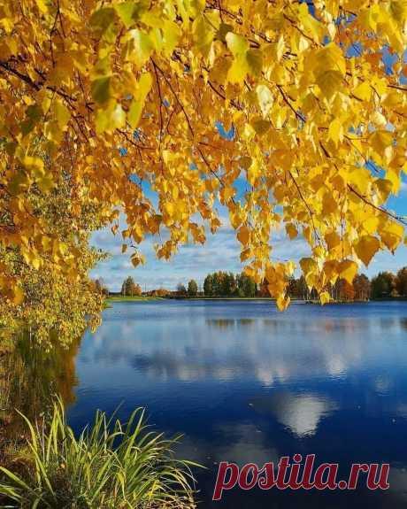 Как можно в Осень не влюбиться? Не замечать её цвета... Она меняет наши лица, Она меняет города!  Ей Бог доверил много Красок, И много чувств доверил ей... Она, как Фея, наших сказок, Среди листвы, среди ветвей!...