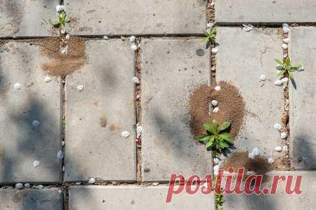 Декоративные дорожки без сорняков и муравьев — Ботаничка.ru