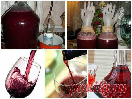 Домашнее вино из… старого никому не нужного варенья! | Самые вкусные кулинарные рецепты