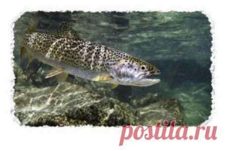 """Всё о рыбалке на - """"SilverPike.ru""""   Всё что нужно знать каждому рыболову! - Part 7"""