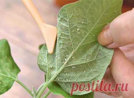 Обзор и методы борьбы с вредителями комнатных растений