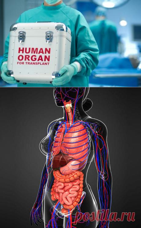 «Продам почку и не только...». Сколько стоит человеческое тело