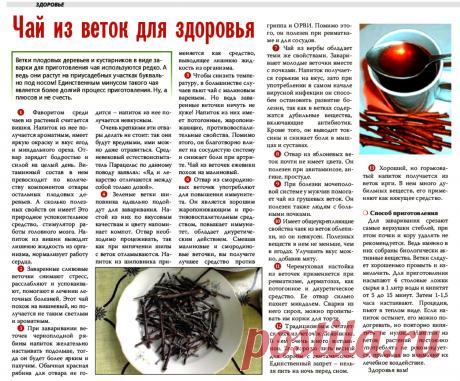 Чай из веток для здоровья