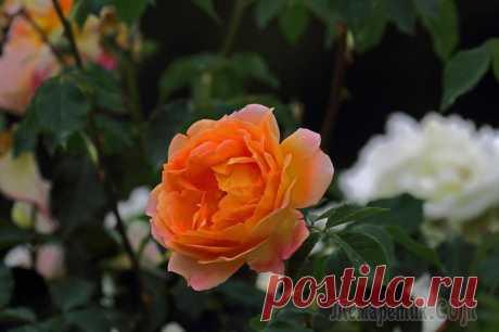 Крым. Симферополь. Ботанический сад КФУ-2