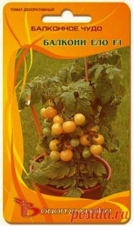 А теперь про рассаду фаворита наших огородов – Сеньора-помидора!: Группа Наши грядки