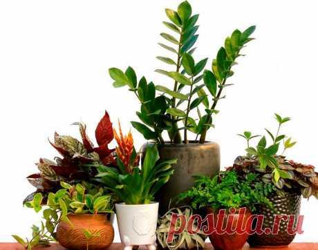 10 растений, которые привлекают положительную энергию в Ваш дом!