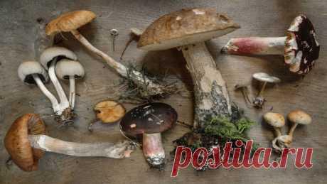 Классический: Девять  видов съедобных грибов и их преимущества Грибы - это универсальные живые организмы, которые являются частью семейства грибов и могут быть замечены во всем мире. Хотя вы можете найти несколько