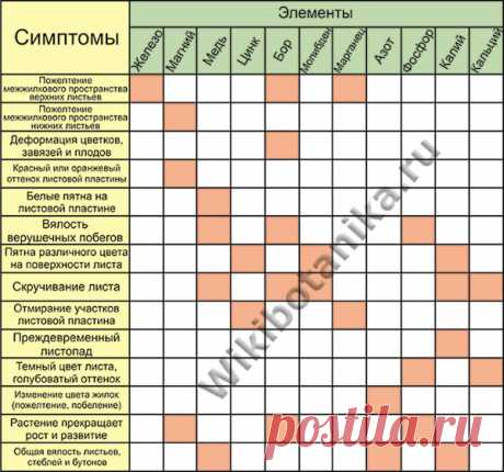 What is not enough for a plant. Deficiency and surplus of mineral elements   WikiBotanika.ru