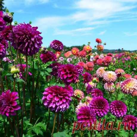 На данном изображении может находиться: 1 человек, цветок, растение, небо, облако, дерево, на улице и природа