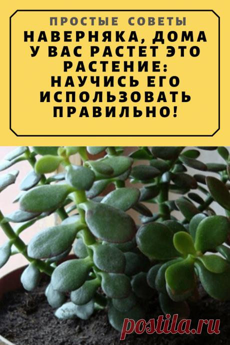 Наверняка, дома у вас растет это растение: научись его использовать правильно! — Простые советы