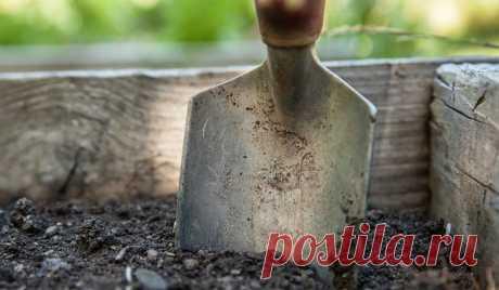 Земля для рассады: как приготовить своими руками