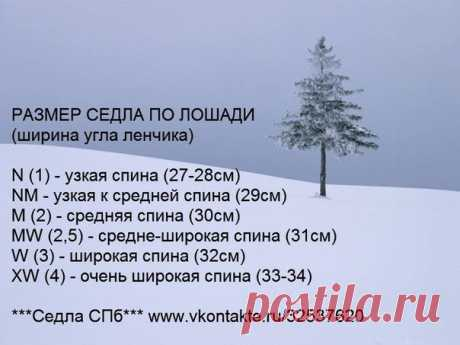 как измерить размер уздечки для лошади — Яндекс: нашлось 3млнрезультатов