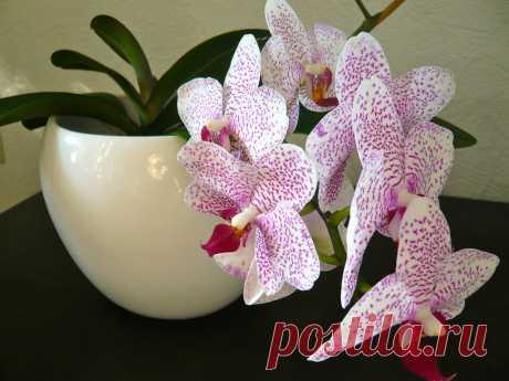 Орхидеи — сбор пазла Лучшая коллекция пазлов для взрослых и детей: собирайте и создавайте свои собственные пазлы.
