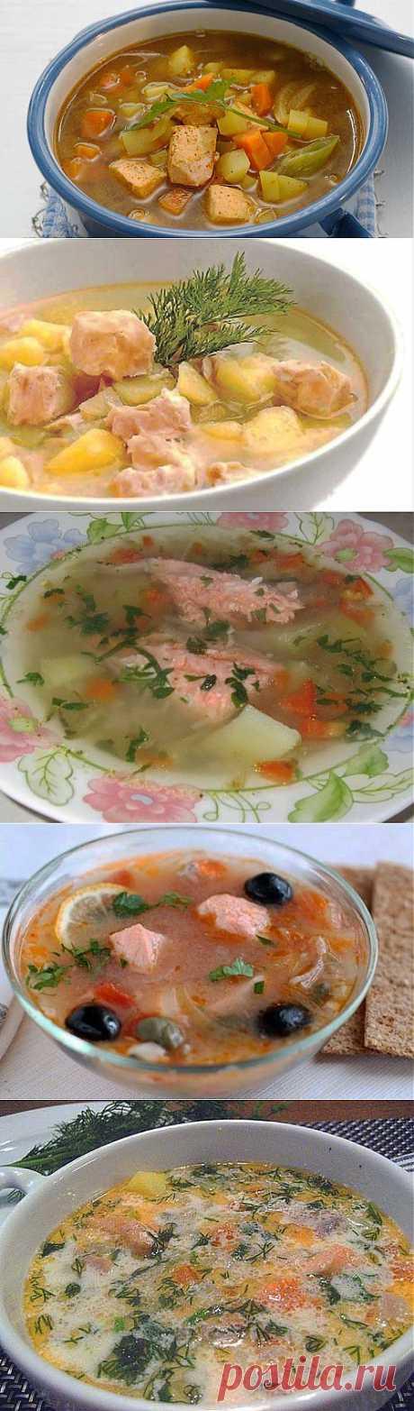 Лучшие супы из семги: рецепты и советы по приготовлению / Простые рецепты