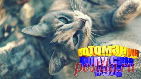 Любите смотреть приколы с котами? Тогда мы уверены, Вам понравится наше видео 😍. Также на котомании Вас ждут: видео кот,видео кота,видео коте,видео котов,видео кошек,видео кошка,видео кошки,видео о котах, видео про, видео смешные котиков, и кошки, коты 2020, кошка видео приколы, милые, приколы о кошках видео, про кошек, про смешно кошек, самые смешные кошки, смешное про кошек, смешные про детей животных, смешные про кошек, смотреть смешные коты, приколы о котах