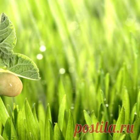 Preparamos los estimuladores del crecimiento de las plantas por las manos