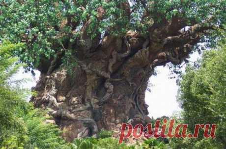 Узоры по дереву — Сияние Жизни