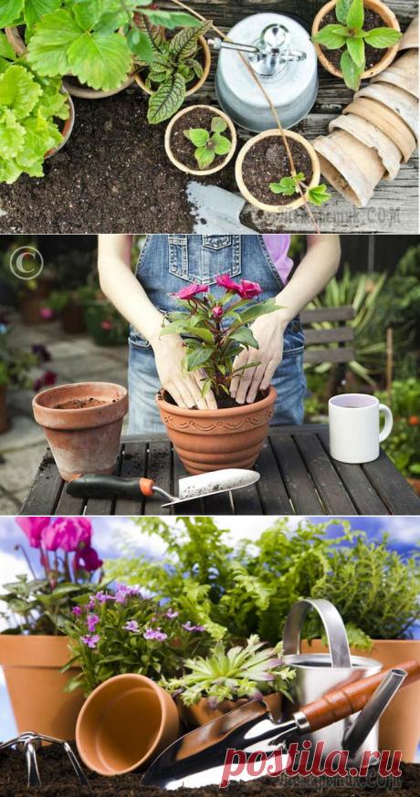 Зачем пересаживать комнатные растения и как это правильно делать