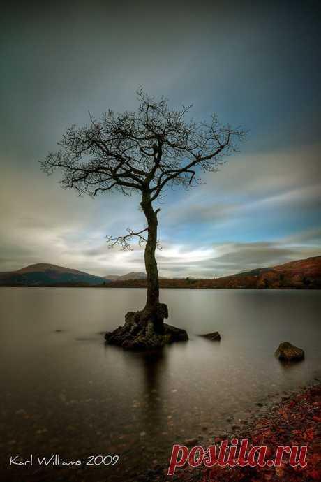 Milarrochy Tree (1) | Tree & Path