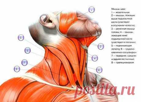 Шея - упражнения и тренировка шейных мышц.