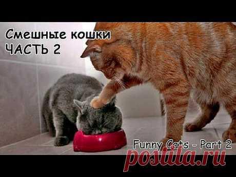 ▶ Смешные кошки #2 - подборка 2013 - YouTube