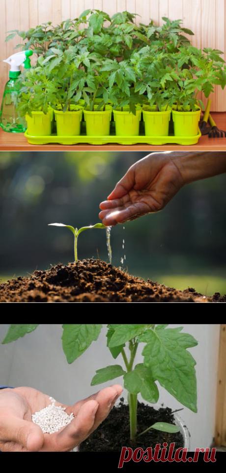 Сад, огород | Нина Рябухина | Фотографии и советы опытных дачников на Постиле