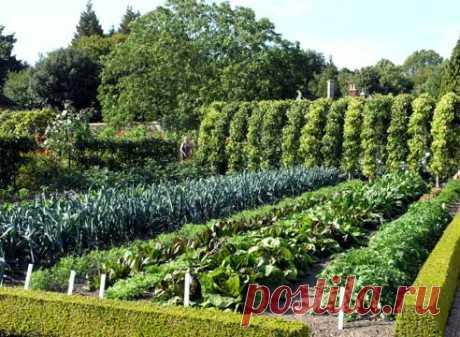 Уплотненные посадки ,или какой овощ с каким дружит