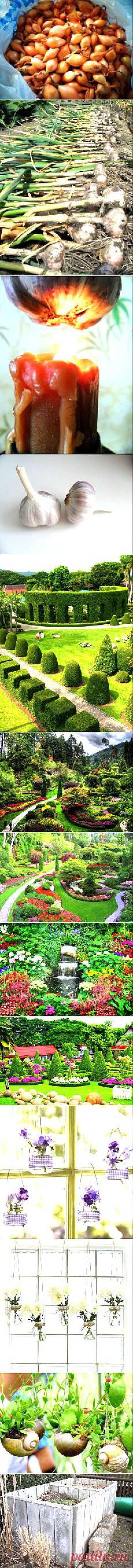 Сад и огород | Постила.ru