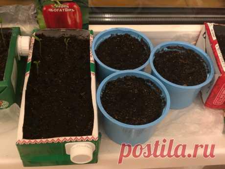 Что делать, если посаженные семена не всходят | Огород Наташи Лаевской | Яндекс Дзен