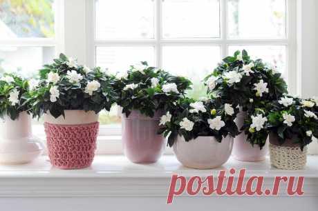 Хитрости ухода за комнатными растениями | Делимся советами