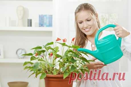 Украшаем интерьер квартиры при помощи комнатных растений — Полезные советы