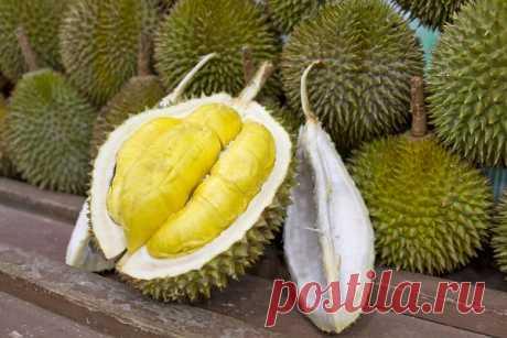 Чемопасен самый необычный экзотический фрукт вмире Вазиатских странах растет множество экзотических фруктов, неизвестных длярусских туристов.