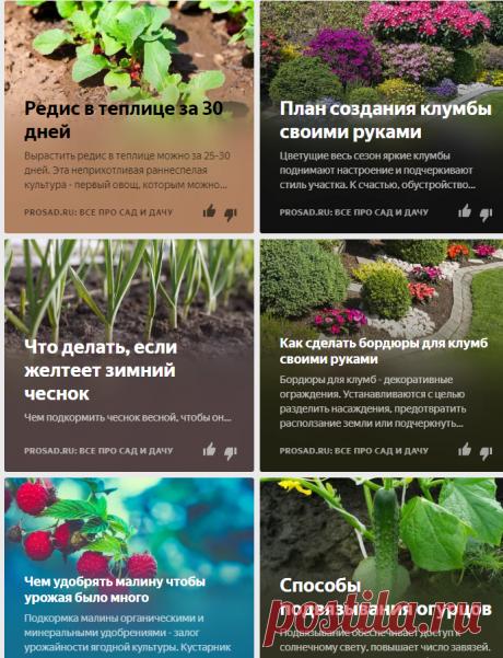 Prosad.ru: Все про сад и дачу | Яндекс Дзен