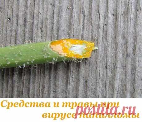 (Средства и травы для лечения папиллом
